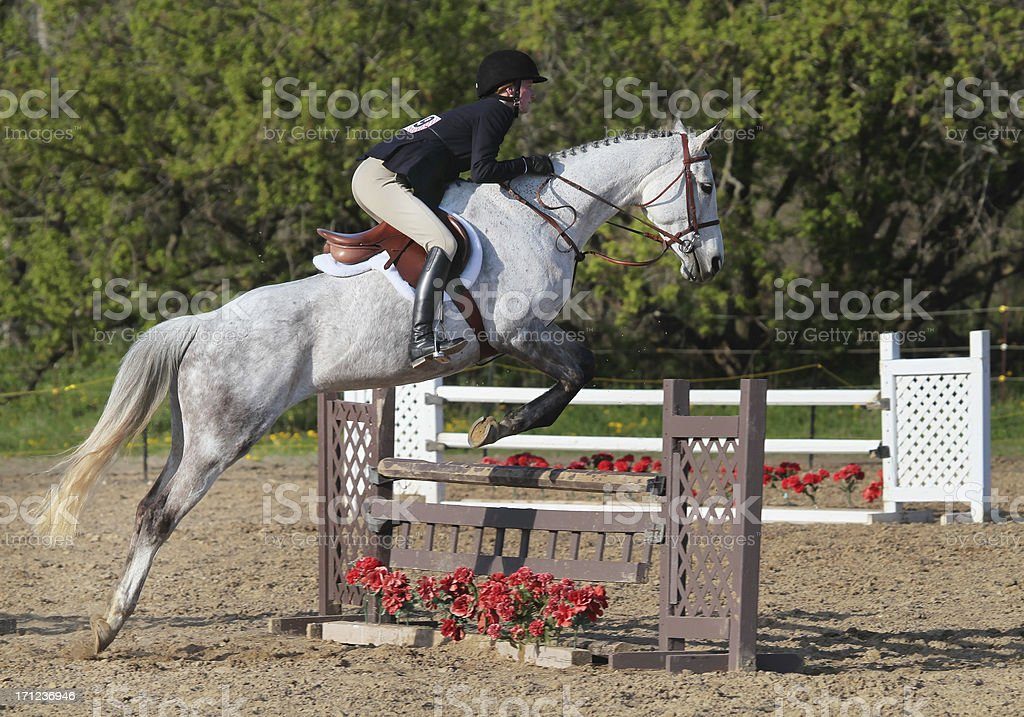 Horse and Rider clear Hunter Jump stock photo