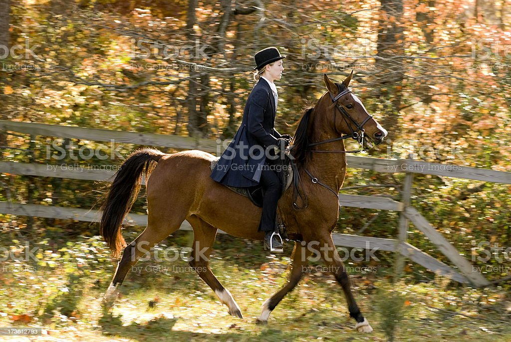 Horse and Rider in Saddle Seat competition Outfit royalty-free stock photo