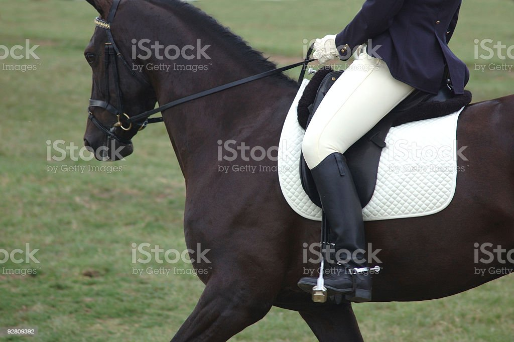 Horse and rider. royalty-free stock photo