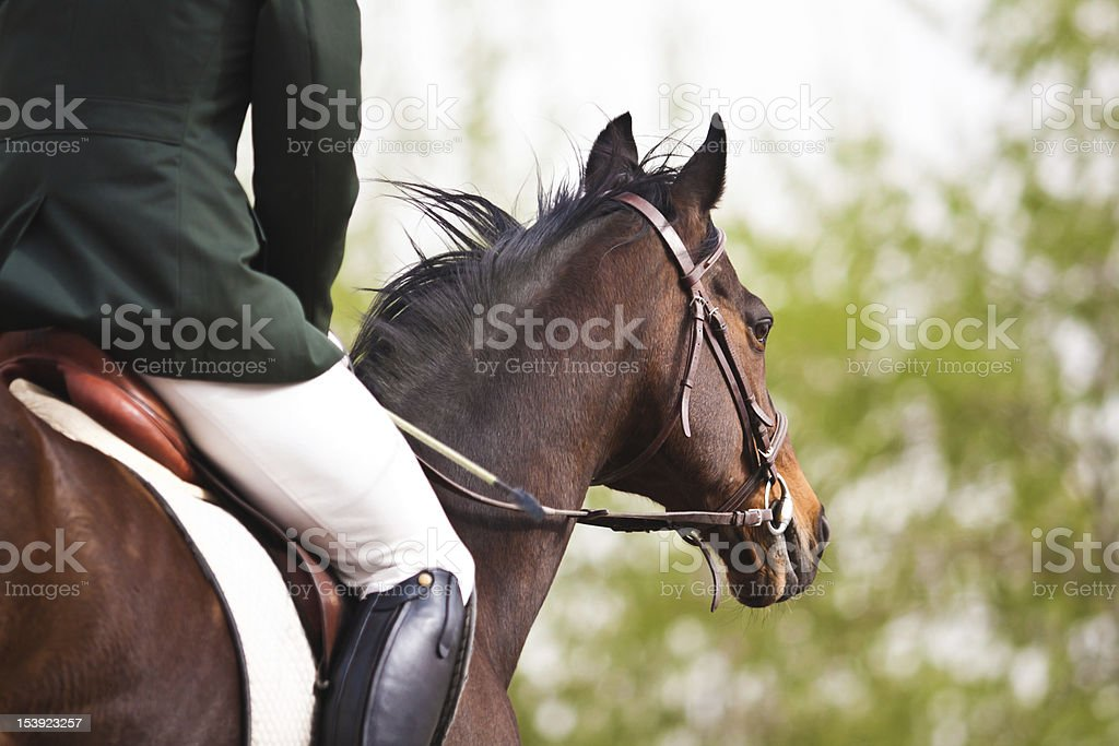 Horse and rider seen from behind in full dressage stock photo