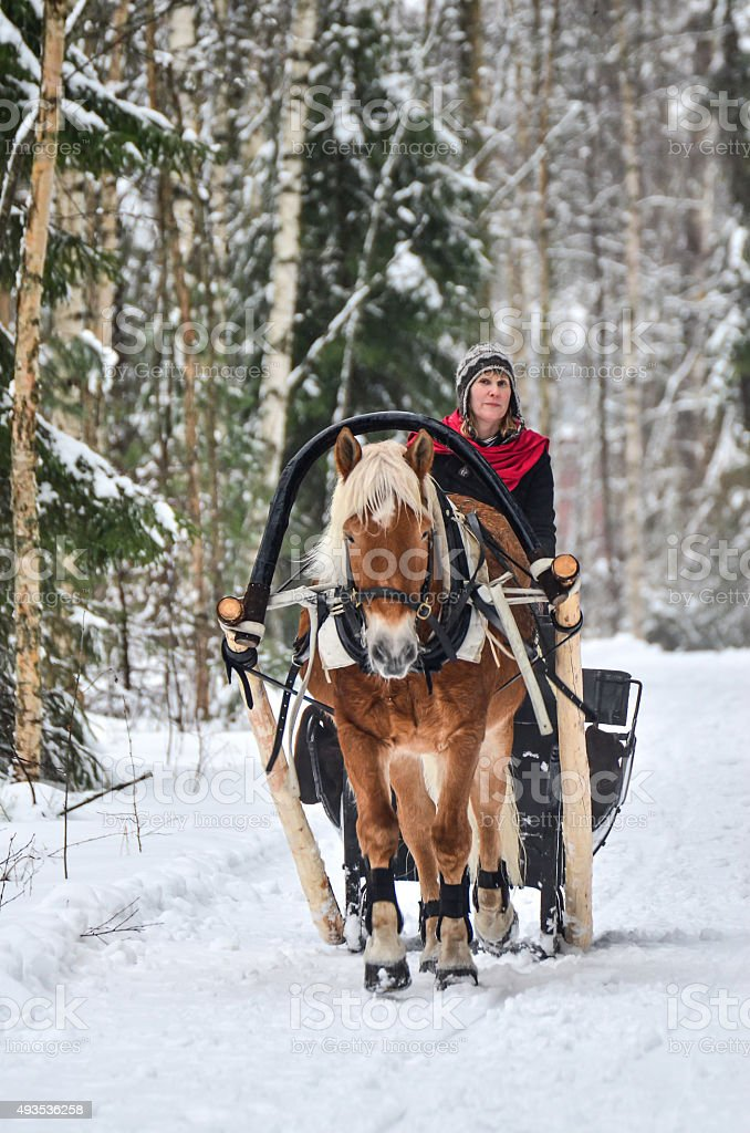 Horse and sleight in forest stock photo