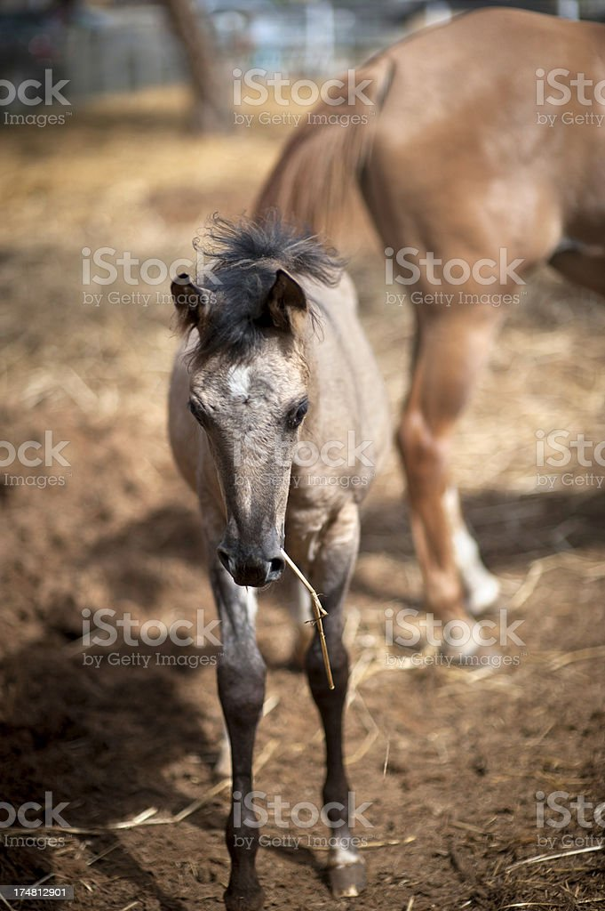 Horse and Stick stock photo