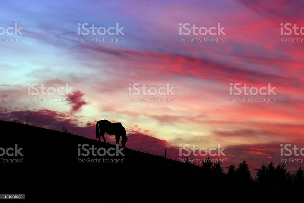 Horse and sunset royalty-free stock photo