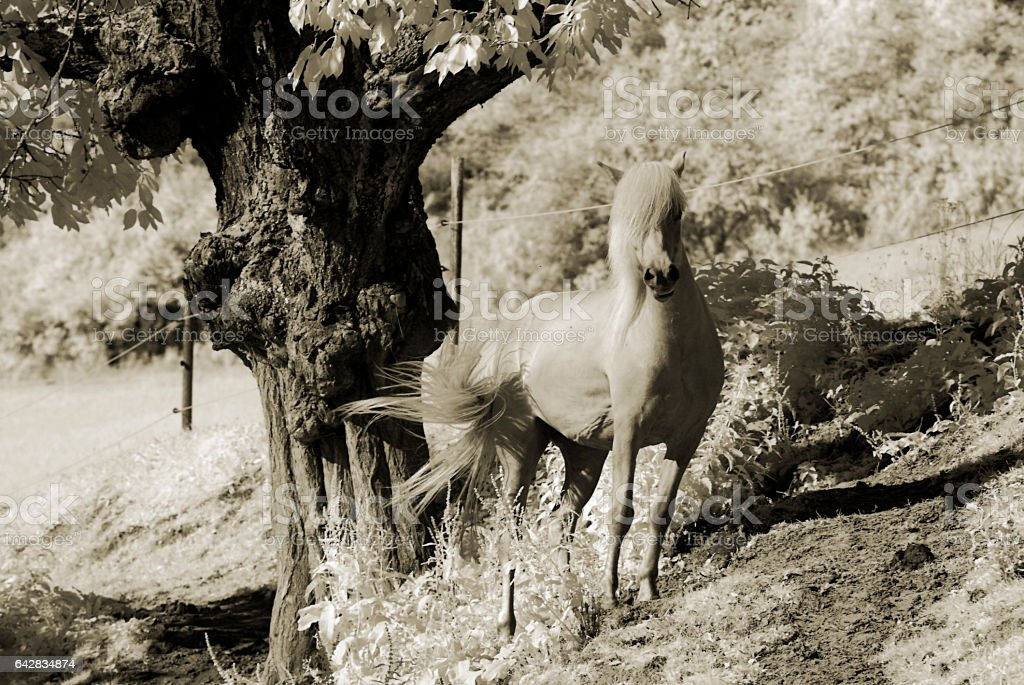 Horse and Tree stock photo