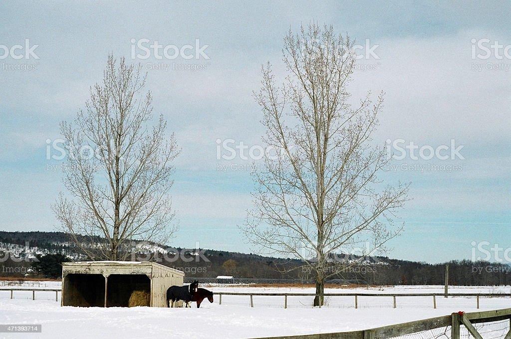 Cheval et deux arbres photo libre de droits