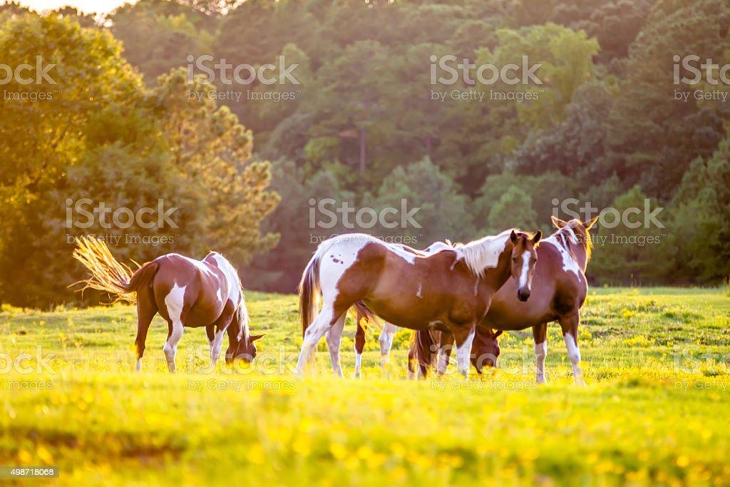 horse animal posing on a farmland at sunset stock photo