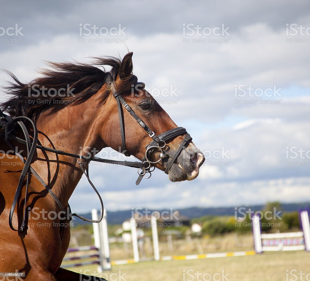horse approaching show jump royalty-free stock photo