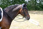 Pferd auf einem Turnier