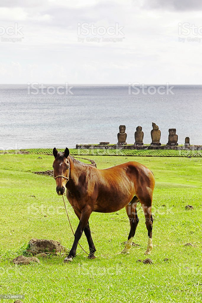 Horse at Ahu Vai Ure - Easter Island stock photo