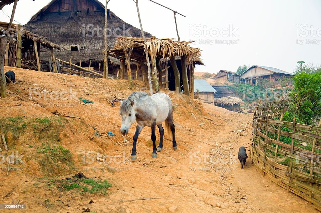 Horse at Akha Village, Pongsali, Laos stock photo