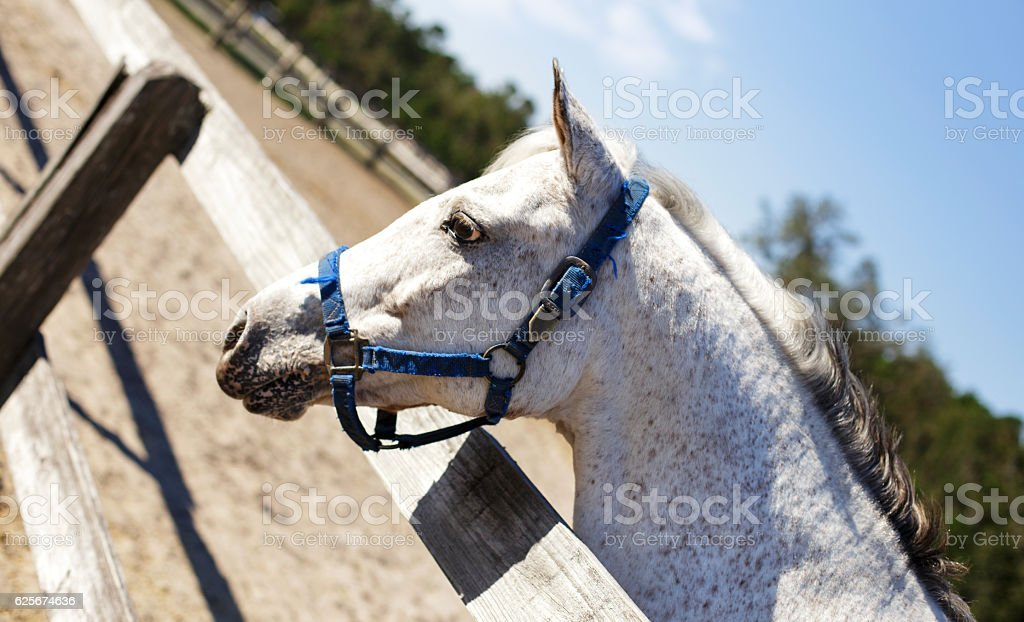 Horse at Fence stock photo