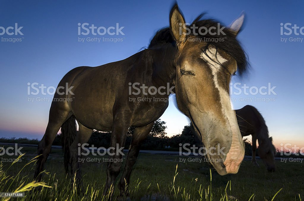 horse at sunset royalty-free stock photo