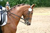 Pferd auf dem Turnier