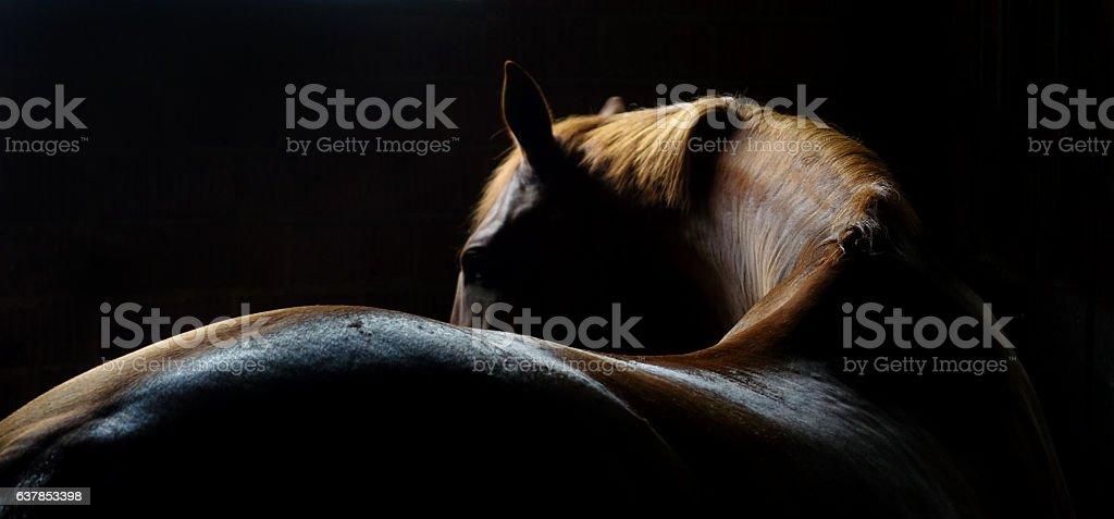 Horse Back and Mane stock photo
