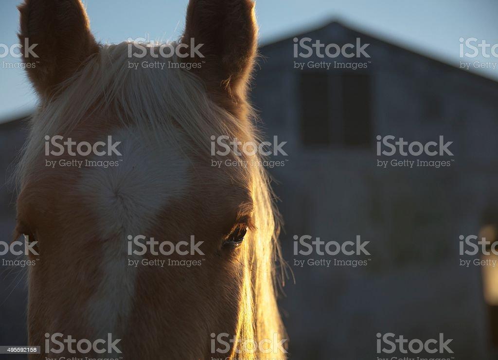 horse-  backlit eye stock photo