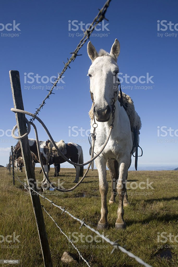 Horse Behind Fence royalty-free stock photo