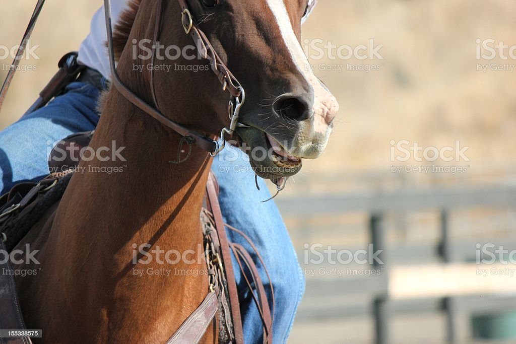 horse being riden stock photo