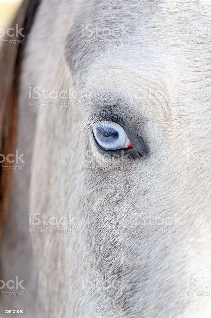 Horse Blue Eye Close Up stock photo