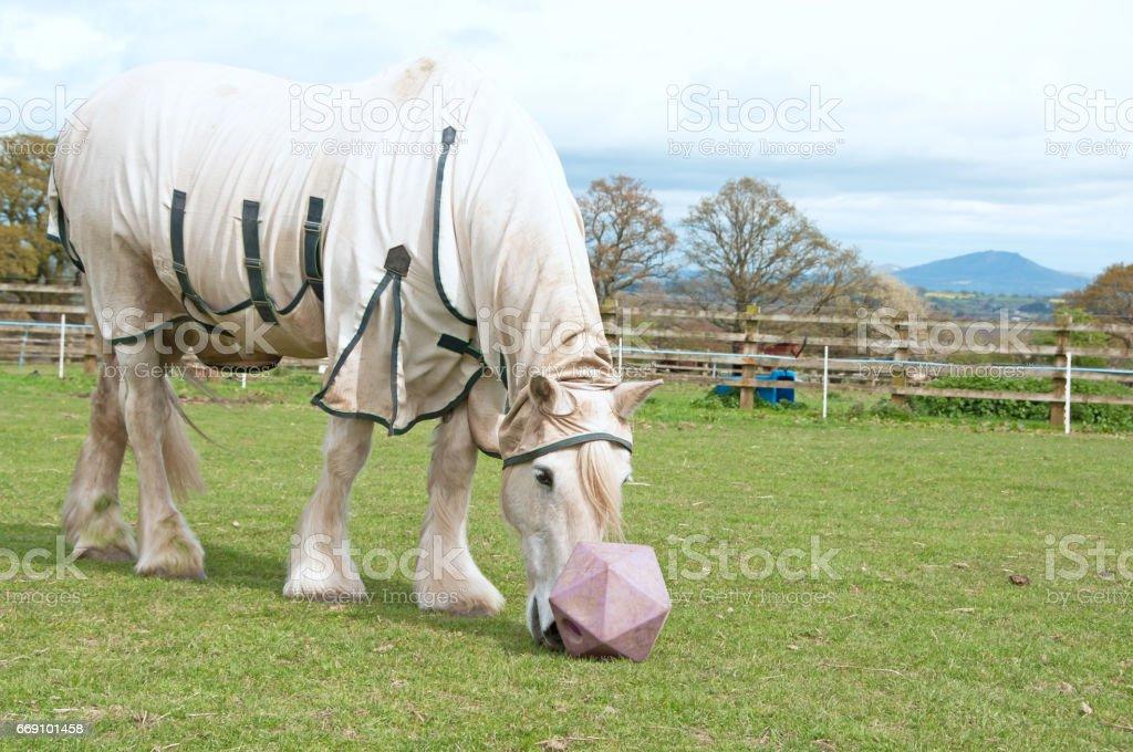Horse boredom breaker stock photo