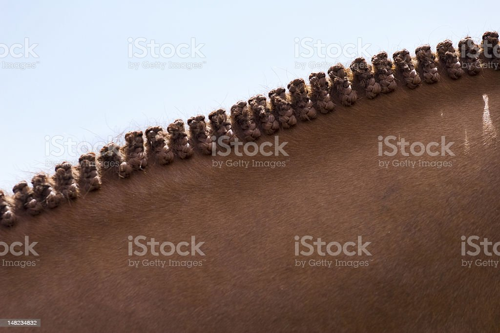 Horse braided stock photo