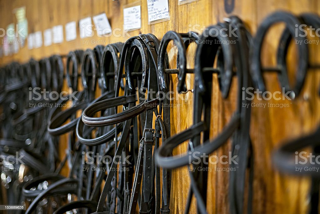 Horse bridles hanging in stable stock photo