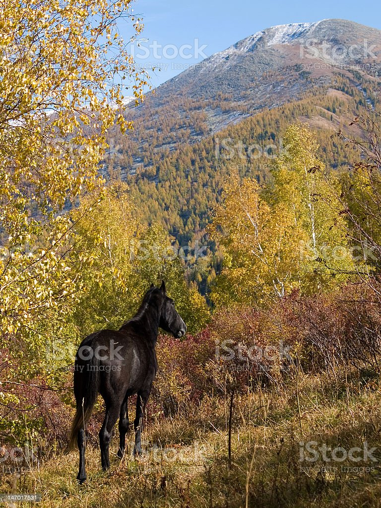 horse by autumn royalty-free stock photo