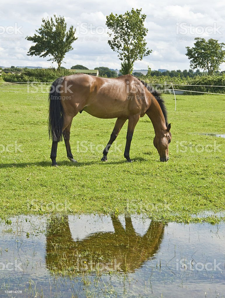 Horse by stream stock photo