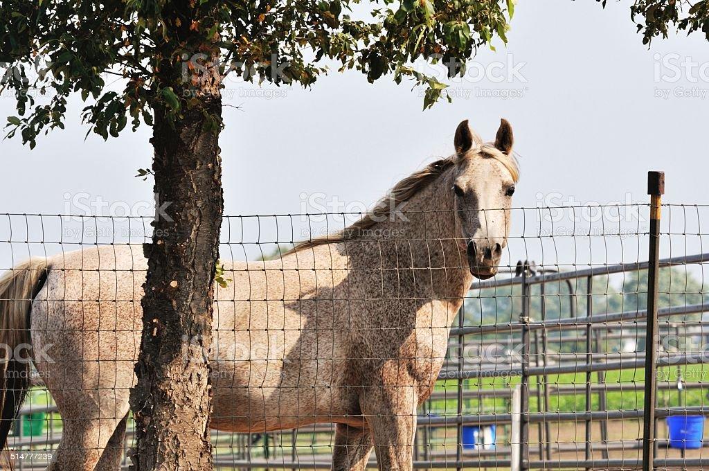 Horse by Tree stock photo