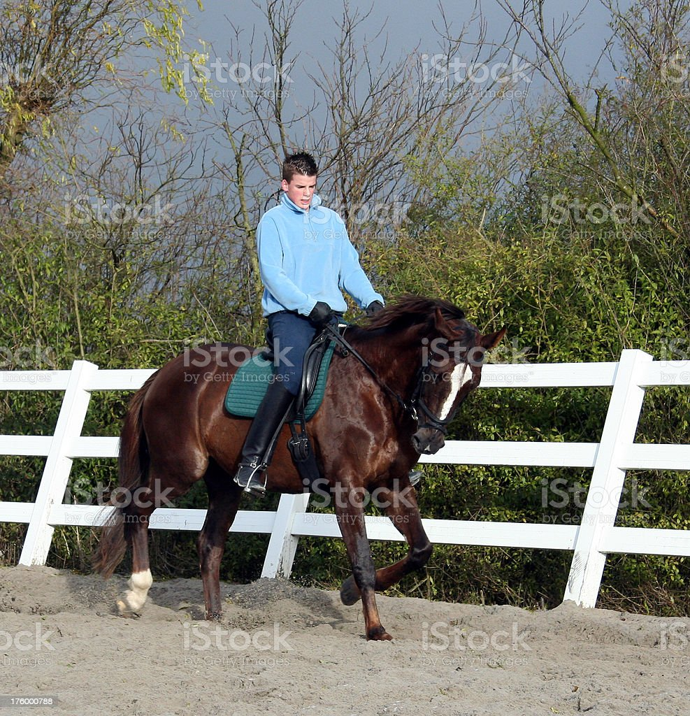 Horse cantering stock photo