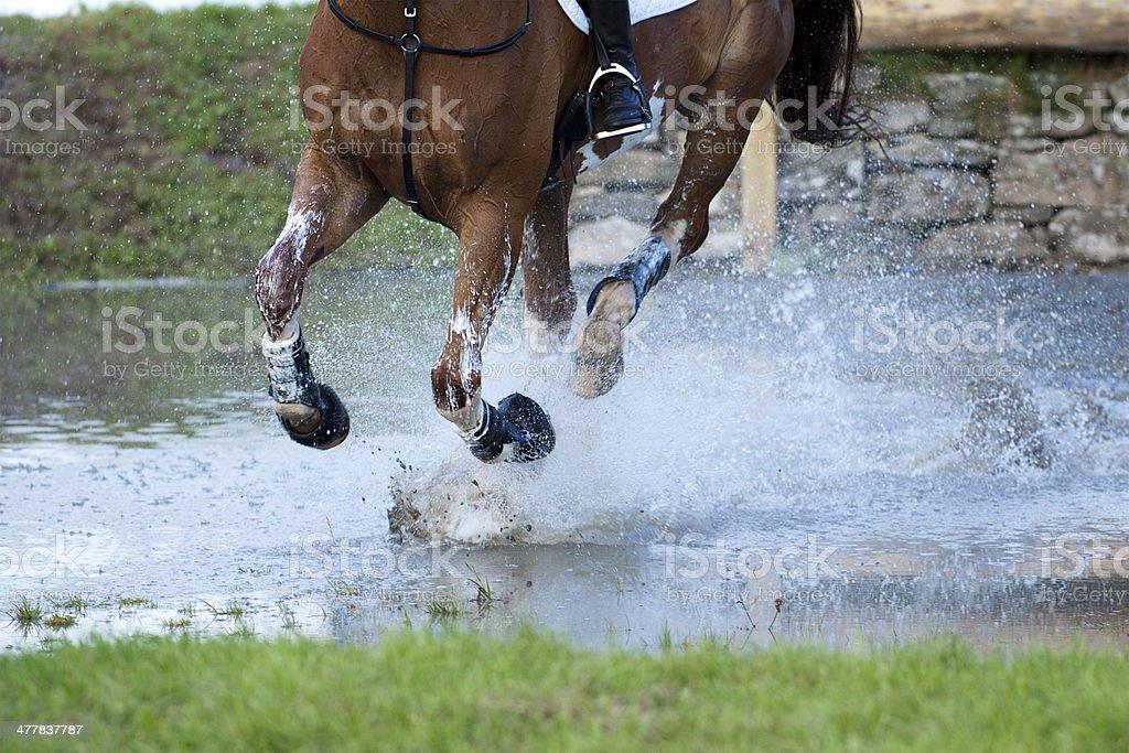 Horse Cantering Through a Water Splash stock photo