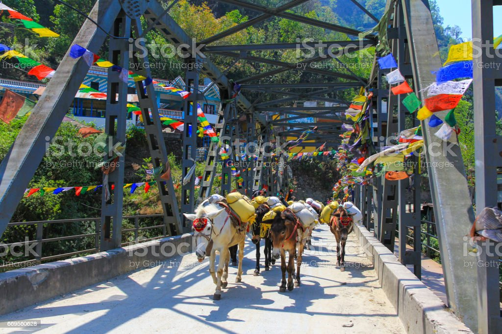 Horse caravan across a bridge in Nepal stock photo