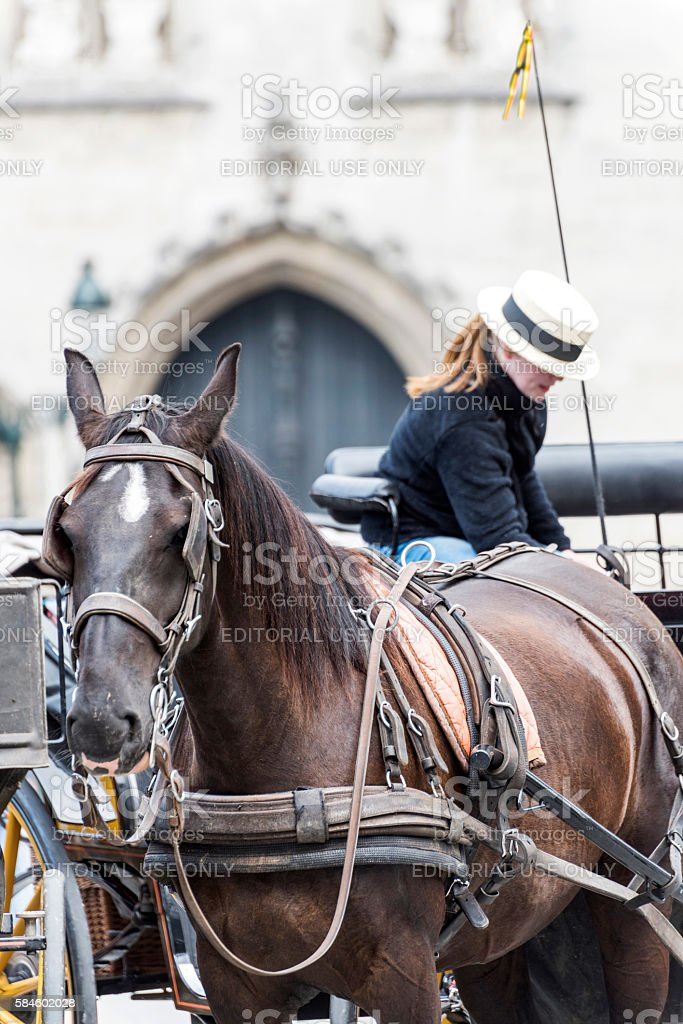 Horse Carriage in Bruges stock photo