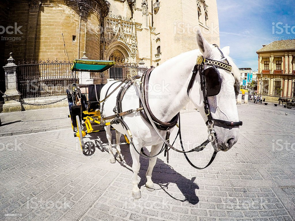 Horse carriage in Seville, Andalusia, Spain. stock photo