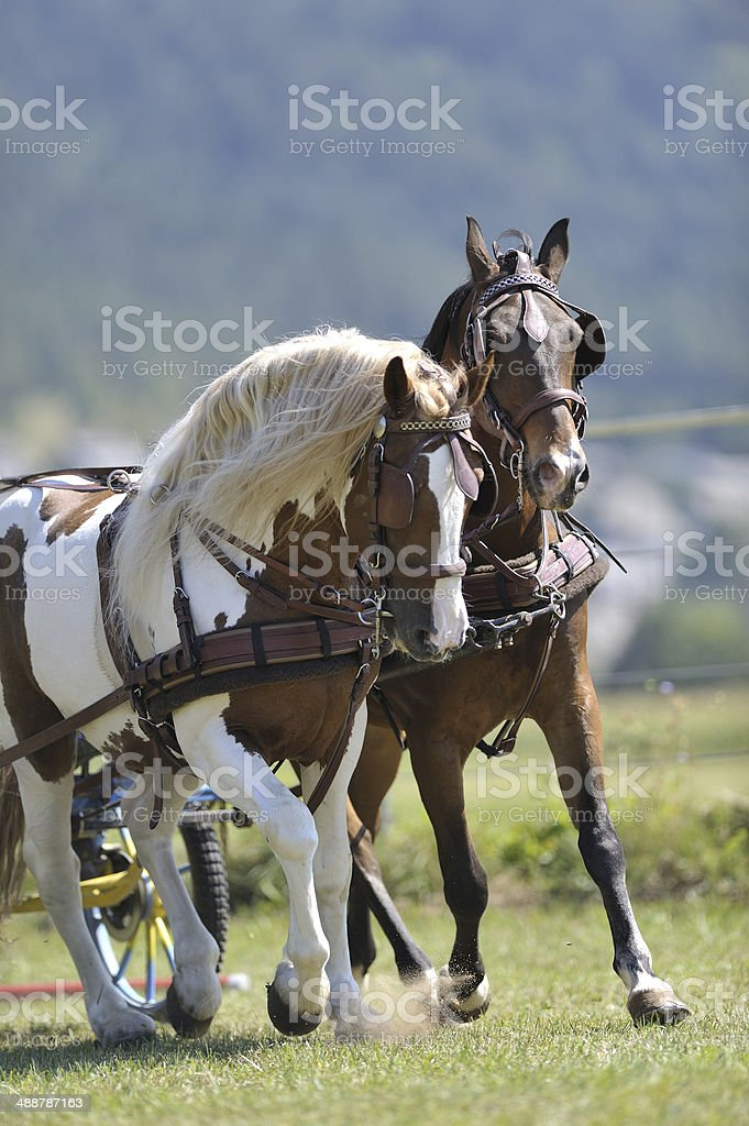 Horse carriage royalty-free stock photo