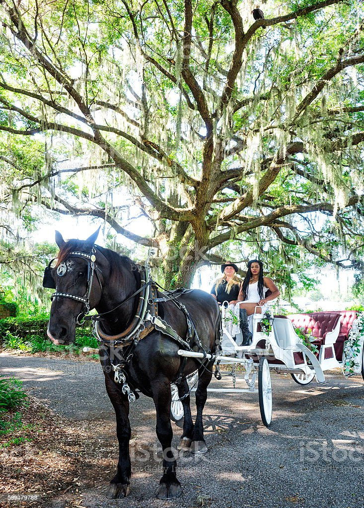Horse carriage under live oaks stock photo