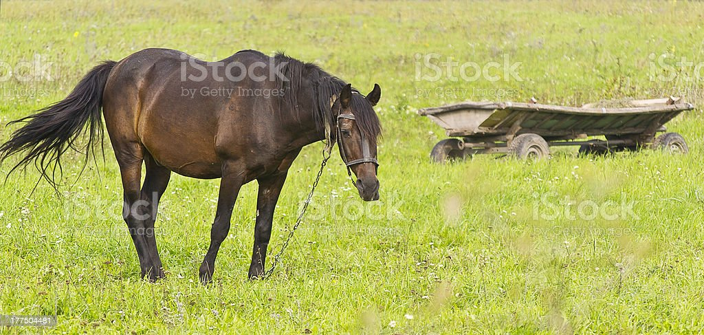horse carriage with horses royalty-free stock photo