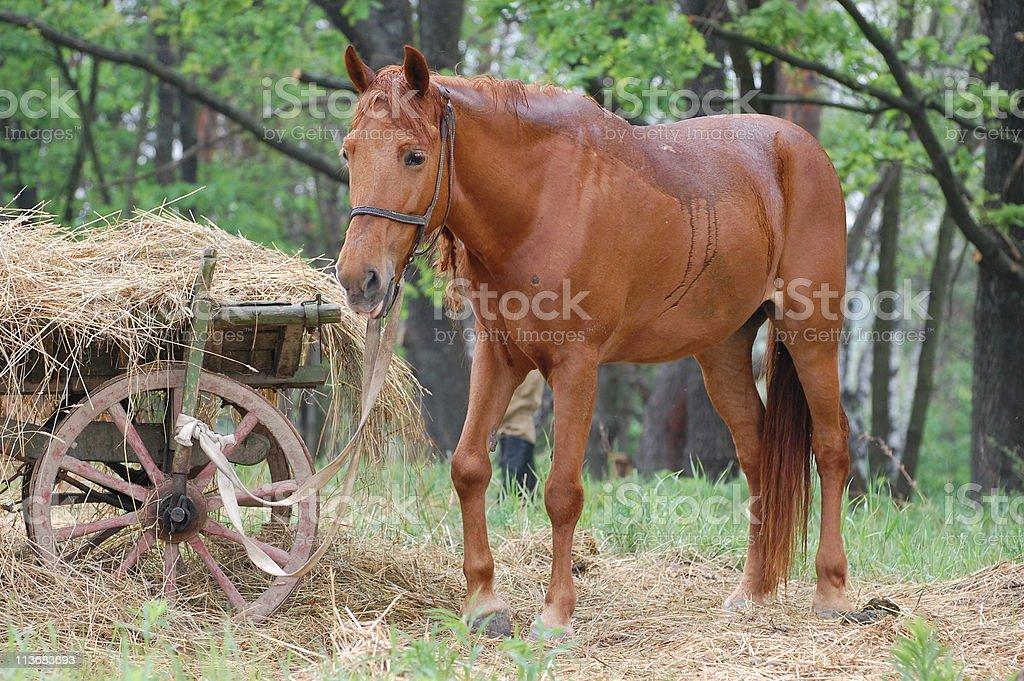 horse cart royalty-free stock photo
