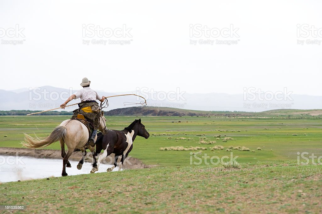 horse catching in Mongolian style royalty-free stock photo