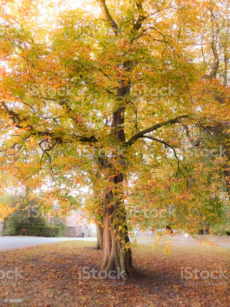 Horse Chestnut Autumn Colors royalty-free stock photo