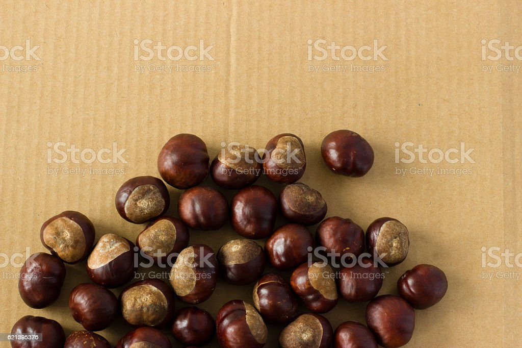 Horse chestnut on a background of cardboard stock photo