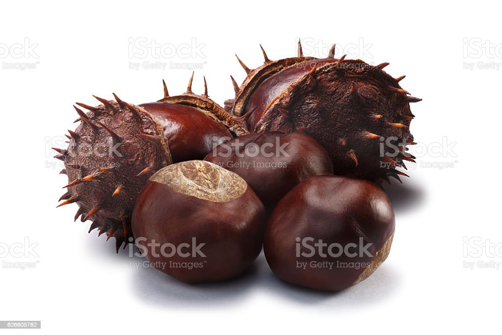 Horse chestnuts, clipping paths stock photo