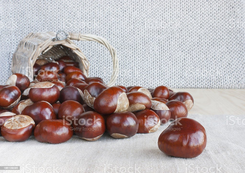 Horse chestnuts or conkers on the table. stock photo