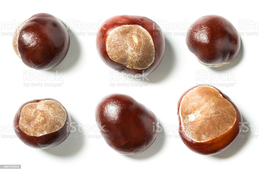 horse chestnuts stock photo