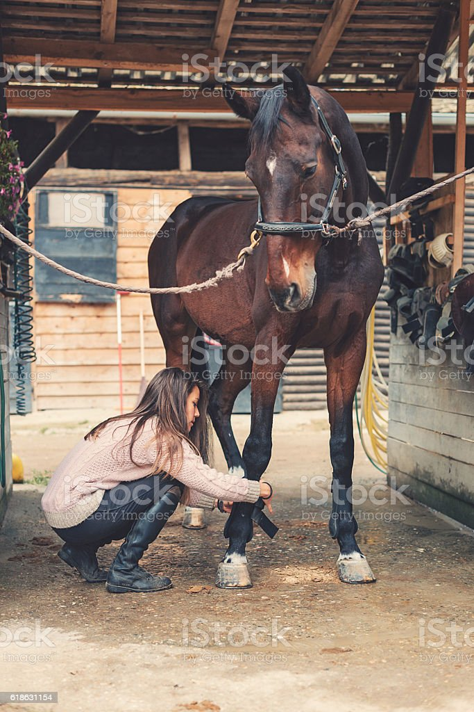 Horse cleaning and brushing before dressage stock photo