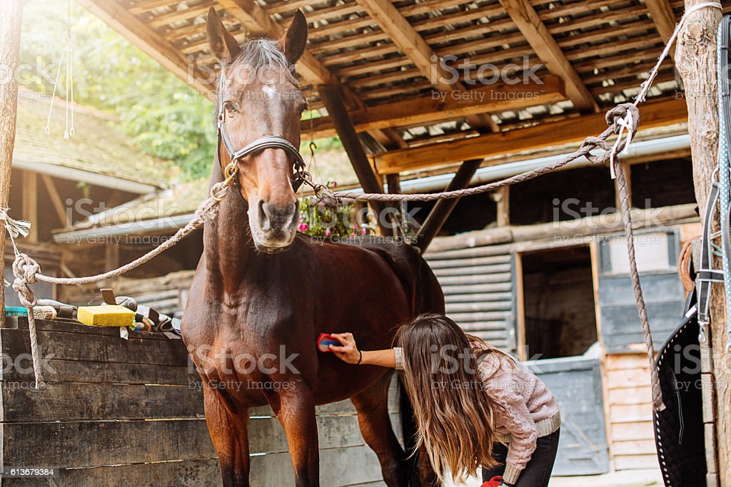 Horse cleaning and brushing stock photo