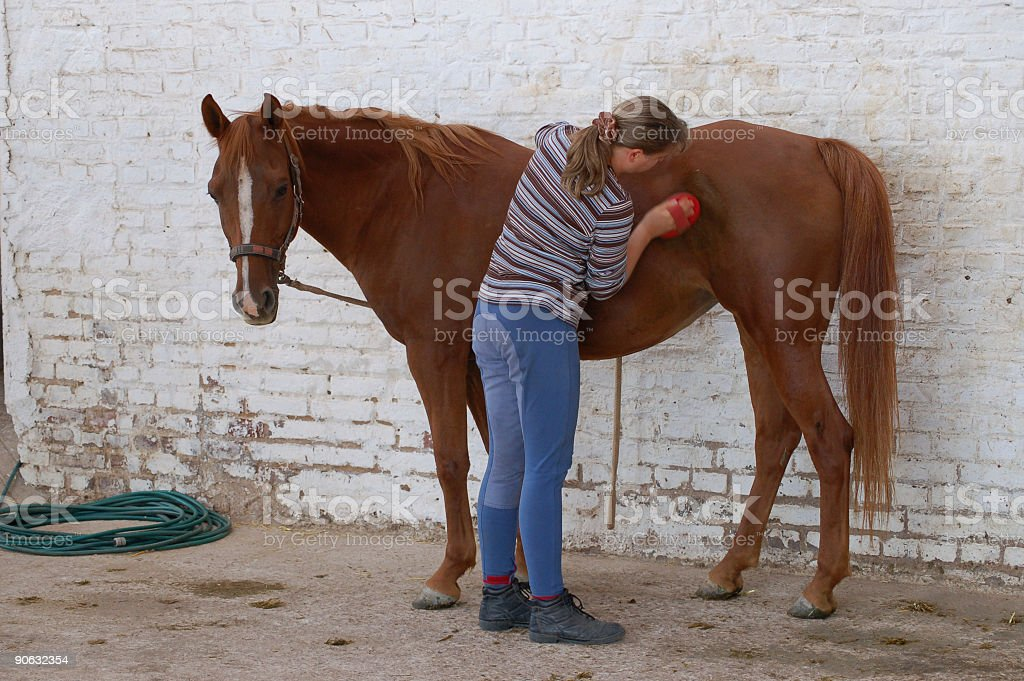 Horse cleaning stock photo