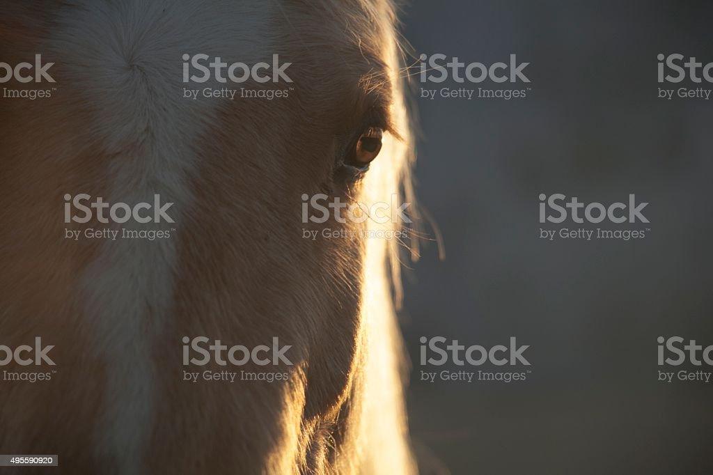 horse close up of backlit eye stock photo