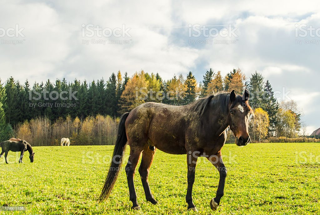 Horse Close Up royalty-free stock photo