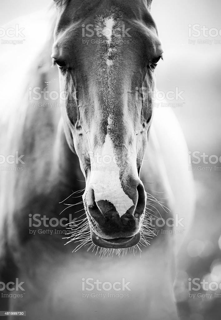 horse closeup stock photo