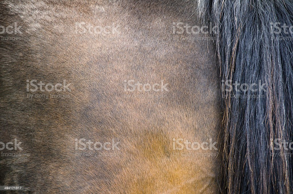 Horse coat texture stock photo